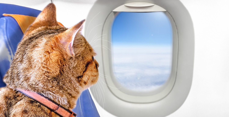 Услуги по перевозке животных самолетом